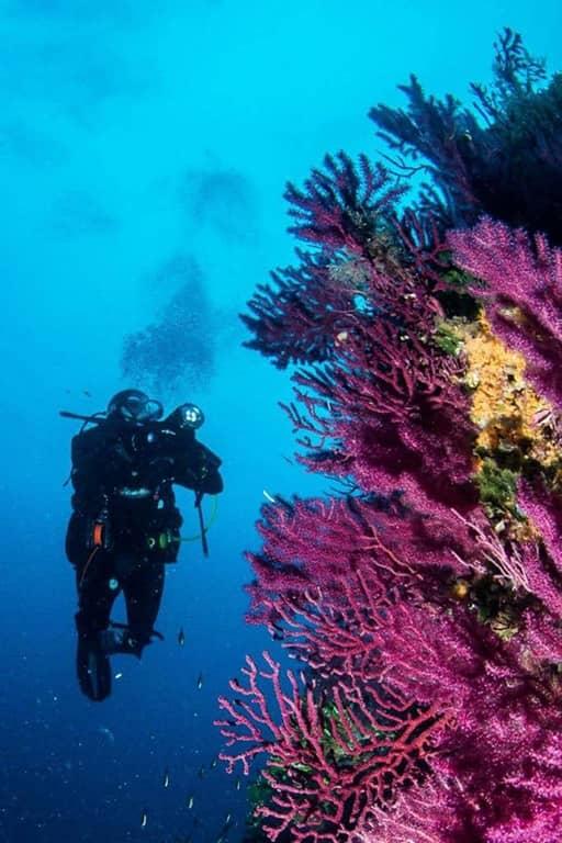 Diving Sardegna Hotel San Teodoro
